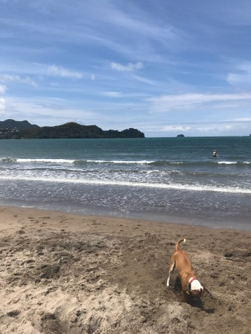 Whitianga on Christmas Eve.